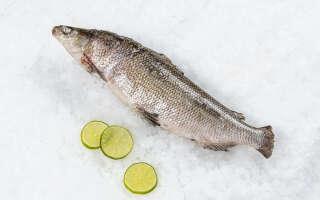 Рыба сиг польза и вред, изучаем свойства пробойной, солёной икры