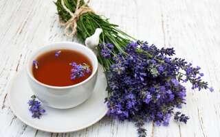 Чай с лавандой польза и вред, 10 основных полезных свойств