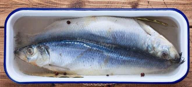 Вредная рыба для здоровья человека, исследования