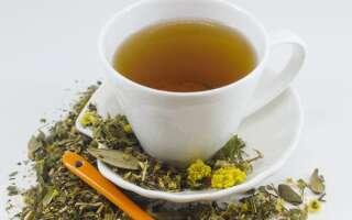 Курильский чай полезные, лечебные свойства для здоровья