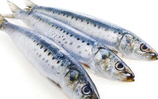Иваси польза и вред, изучение свойств рыбы при заболеваниях
