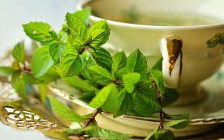 Чай с мятой польза и вред, полезные свойства для женщин, мужчин