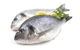 Дорадо что за рыба, польза и вред для организма, свойства