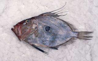 Дори что за рыба, польза и вред для организма, свойства