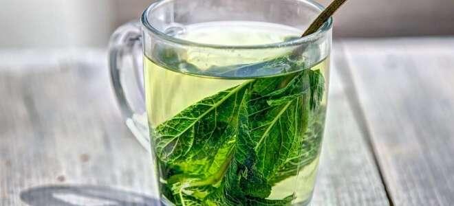 Чай из листьев смородины: польза, вред, лечебные свойства