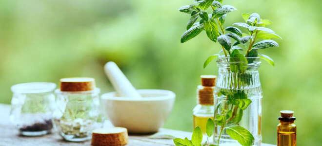Мята трава лечебные свойства, изучение пользы и вреда