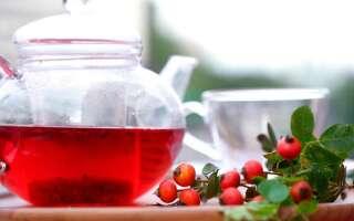 Чай из шиповника полезные свойства, возможный вред