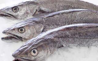 Рыба хек (мерлуза) польза и вред, свойства для организма