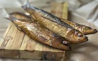 Салака польза и вред, изучаем полезные свойства рыбы