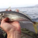 Поймал рыбку