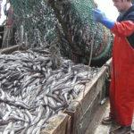 Вылов рыбы хек