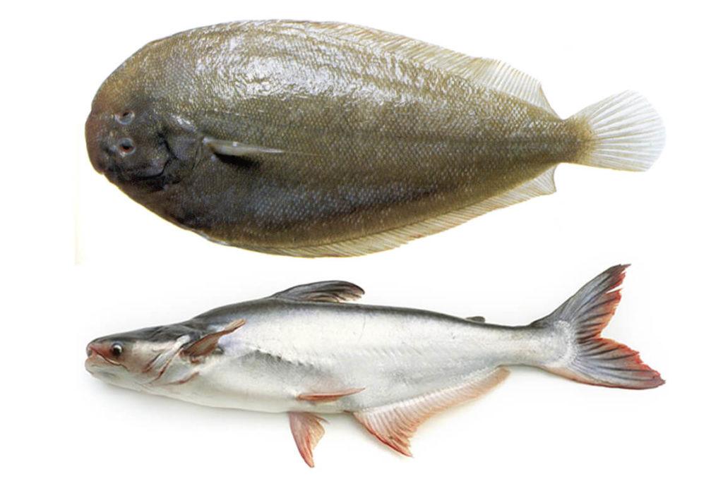 Морской язык и пангасиус