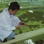 Ферма по выращиванию рыбы тюрбо в Китае