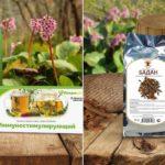 Чай и корень бадана