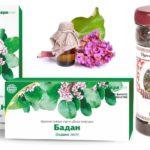 Чигирский чай, настойка, цветы и листья бадана