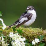 Птица на ветке цветущего боярышника