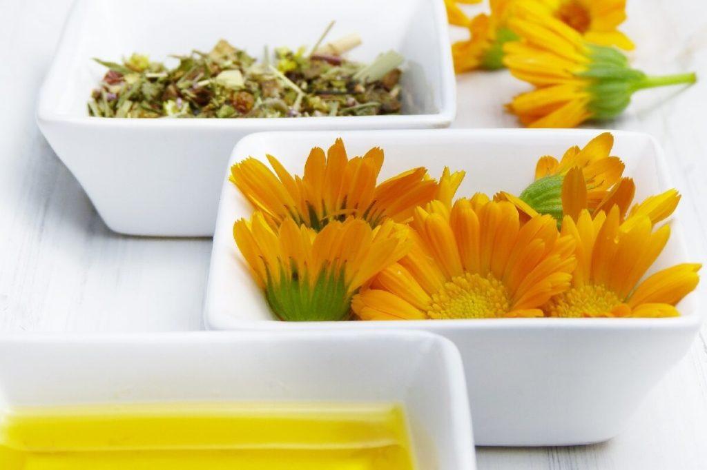 Цветы календулы для использования в медицине
