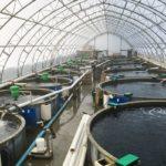 Ферма по выращиванию арктического гольца в Канаде
