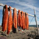 Сушка арктического гольца в канадском Нунавуте