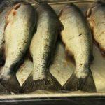 Пять больших рыбин свежей кеты