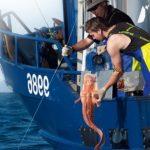 Промышленный вылов рыбы конгрио