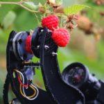Робот собирает малину