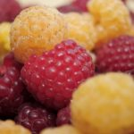 Красные и желтые ягоды малины крупным планом