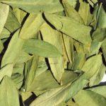 Сухие листья сенны