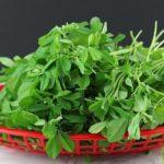 Собранная трава хельба