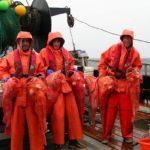 Улов северного морского окуня