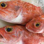 Три рыбины морского окуня