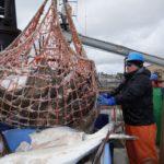 Промышленный вылов палтуса на Аляске
