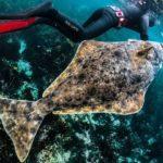 Палтус и водолаз под водой