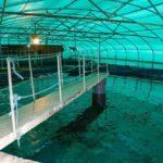 Внутри аквафермы