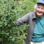 Пожилая женщина собирает жимолость