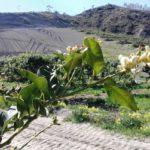 Ветка цветущего бергамота