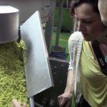 Производство эфирного масла бергамота в Калабрии (Италия)