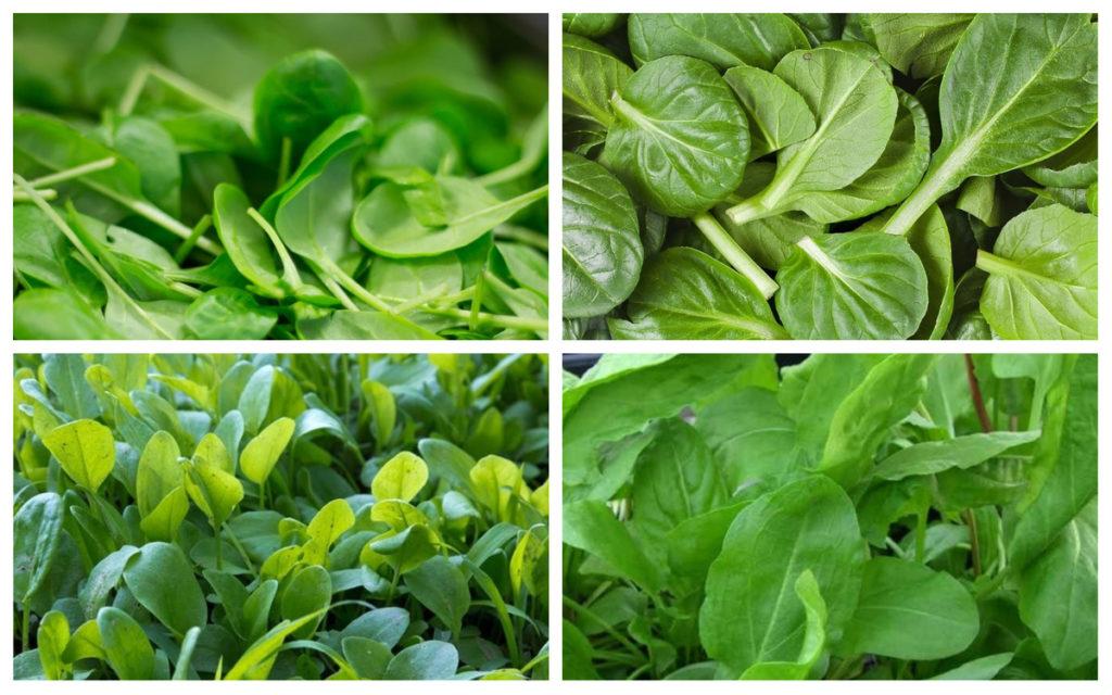 Разновидности шпината