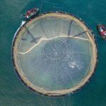 Ферма для разведения лосося (сёмги)