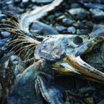 Скелет рыбы на берегу