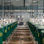 Внутри фермы по выращиванию лосося