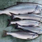 Представители семейства лососевых