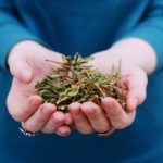 саган дайля польза и вред при заболеваниях