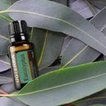 аромамасло из листье эвкалипта