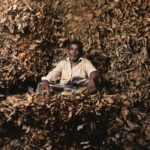 Листья корицы