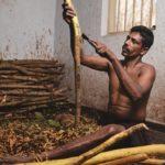 Переработка корицы на Шри-Ланке