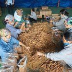 Пакетирование палочек корицы во Вьетнаме