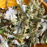 Сушеные листья и соцветия полыни в миске
