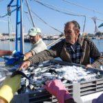 улов сардины в контейнере