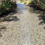 Горбуша на нересте в пресноводной реке
